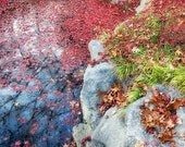 Fall Photography, Autumn Art, Nature Print, Red Leaves, Stream, Creek, Blue Water, Reflection, Colorful Home Decor  - Autumn Reflections