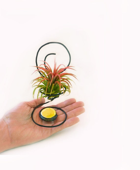 Wire Chair Air Plant Holder - Co worker office  Gift -Under 25 dollars