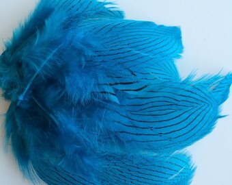 GOLDEN PHEASANT FEATHER Loose , Teal Blue  / 750 - T