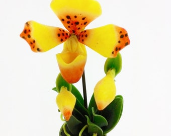 Miniature Polymer Clay Flowers Supplies Tropical Orchids, Lady Slipper