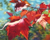 Autumn Leaves Art Watercolor Painting print by Cathy Hillegas, red maple leaves, watercolor print, watercolor leaves, red orange, green blue