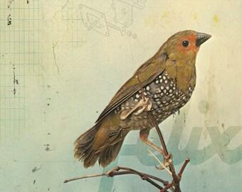 Bird No.2
