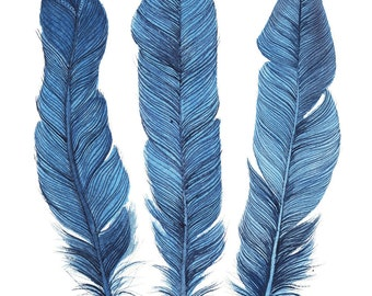 Aqua Turquoise Blue Feathers Watercolour Art Print Boho Chic Artwork Beach House Style
