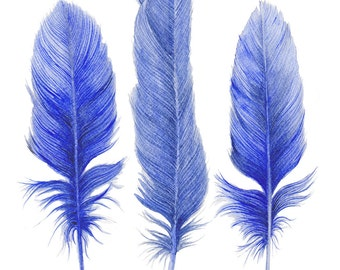 Three Blue Feathers Watercolor Art Print Shibori Blue Hamptons Style Decor Coastal Art