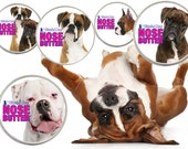 BOXER NOSE BUTTER® Handcrafted All Natural Balm for Dry Dog Noses 2 oz Tin 5 Boxer Labels: Fawn, Brindle, White, Show & Duo in Gift Bag