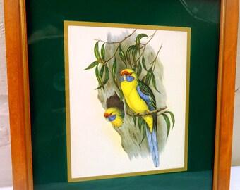Beautiful Framed 1940's Bird Art Print