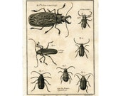 1788 INSECTS BEETLESprint original antique insect engraving bug print no. 2