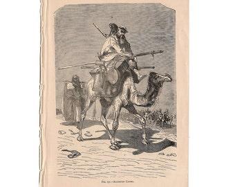 1895 ALGERIAN CAMEL print original antique african animal engraving