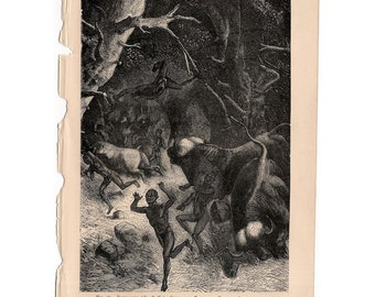 1895 BUFFALO ATTACK print original antique african animal angraving