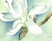 White Magnolia Original Watercolor Painting 4 x 6