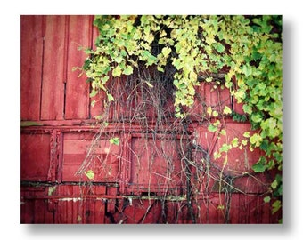 Red Barn Photography, Rustic Home Decor, Barn Photograph, Red Country Decor, Red Barn Decor, Green Ivy, Farmhouse Chic Rustic Red Barn Print