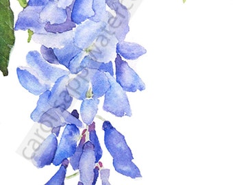 Wisteria watercolor archival print
