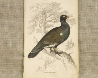 Antique Bookplate , Hand Colored , Bird , Samuel Highley , 19th Century , W.H. Lizars , Natural History , Naturalist Library , Birds , Rare
