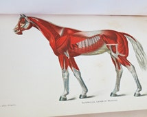 1916 Diseases of the Horse Dept of Agriculture Hardcover B&W and Color Illustrations Medical Equine