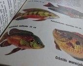 1972 FISH Vintage Spanish BOOK - FISHES of the world - A lot of Fish illustrations, posters and plates - Los Peces