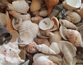 Bulk Natural Seashell Mix- 1lb pound of Nature's Own Sea Shells Loose for Weddings, Crafting, DIY Decorating/ SHIPS FREE