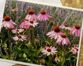 Lovely Array of Flowers Photo Note Card Nature Photography Montana