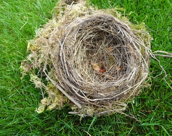 Birds Nest   Naturall Birds Nest  Rustic Decor   Natural Nest