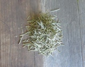 Rosemary - Wiccan herbs witchcraft pagan herb magick purification occult supplies altar tools magic dried rosemary