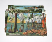 15 Vintage Florida Outdoor Beauty Postcards Used