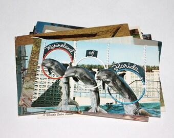 15 Vintage Florida Animals Chrome Postcards - Used