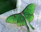 Luna Moth Original Art Necklace Actias Luna