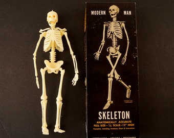 Vintage Human Skeleton Anatomy Model in Original Box, 1/6 scale Modern Man (c.1960s) - Science Decor, Medical Oddity Collectible, Art