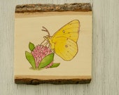 Butterfly Wood burned Plaque, Clover, Insect, Animal, Nature,Watercolor, Basswood, Made in Ohio, Nursery Art, Woodburning, Yellow butterfly
