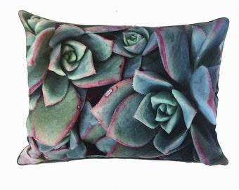 """17"""" X 23""""  Fantastic succulent pillow"""