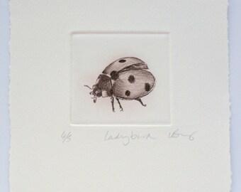 Seven spot ladybird drypoint print. Mono-chrome ladybug