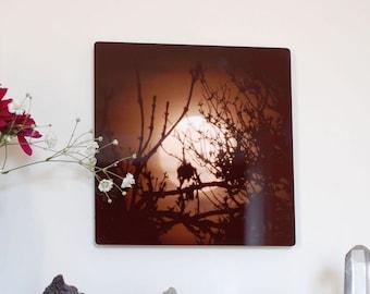 Black gold Metal panel, Full Moon Photograph on aluminum, Moon in night sky behind trees, aluminium high gloss black & gold wall art,