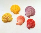 Noble Pectin Shells Set of 5