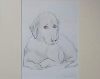 Dog portrait sketch, small animal portrait drawing, mini drawn portrait of dog, cat, animal