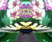digital download patterns butterfly mirror images for your creation NO physical item will be shipped    2 JPG