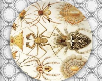 Haeckel arachnids melamine plate