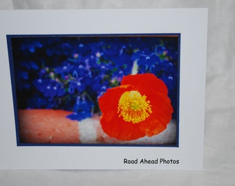 photo card, orange and blue flower photo