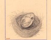 Original Drawing - Avian 3