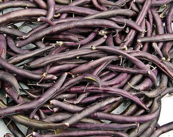 Royal Burgundy Heirloom Bush Bean Seeds Non GMO