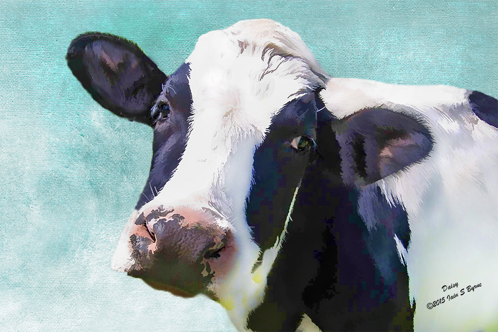 A Grazing Holstein Dairy Cow Art/Canvas Print. Poster ... |Holstein Cow Decorations