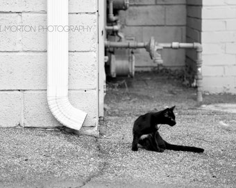 Alley Cat + Street Photography + Black & White + 5x7 print