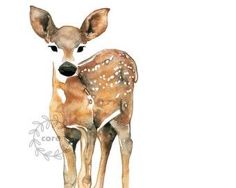 Fawn deer doe watercolor watercolour illustration