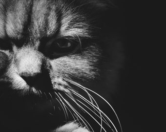 Sinister Kitty - Photograph