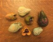 Casandra's Seeds of Gratitude