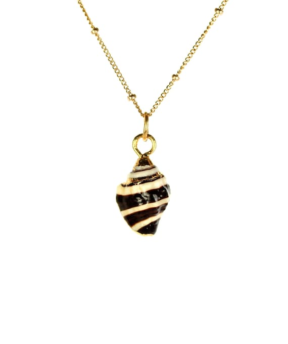 Shell necklace - zebra shell necklace - pyrene shell - sea shell - beach necklace - gold lined spiral shell on a 14k gold vermeil chain