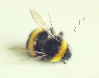 Sleeping Bee print