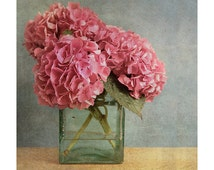 Hydrangea photo print, pink hydrangea photographic print , fine art flower print, gift for her, gift for gardener, pink hydrangea wall art