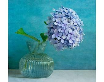 Blue Hydrangea photo print, hydrangea photographic print , fine art flower print, gift for her, gift for gardener, blue  hydrangea wall art