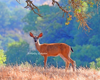 "Deer on Hillside    8""x10"" Photo"