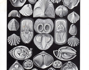 1899 Ernst Haeckel Spirobranchia Marine Life Kunstformen Natur 1st Pl 97 Antique Print