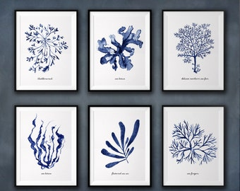 Seaweed watercolor painting, Coastal art, Set of 6, Beach house decor, Bathroom Décor, Blue and white wall decor, Blue seaweed print set